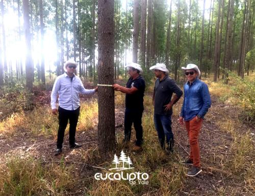 Eucalipto do Vale promove cursos em Itamarandiba, Minas Gerais